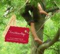 Kirschbaumtage ... Cherry Tree Days